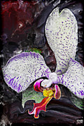 Orchids Digital Art - Dragon-Tongue by Dirk Czarnota