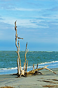 Driftwood On Beach Print by Bill Barber