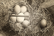Old Barn Photo Posters - Eggs Poster by Joana Kruse