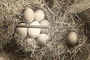 Eggs Print by Joana Kruse