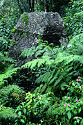 Puerto Rico Prints - El Yunque National Forest Print by Thomas R Fletcher