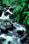 Bromeliads Photography - El Yunque Waterfall by Thomas R Fletcher