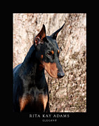 Dobe Framed Prints - Elegant Framed Print by Rita Kay Adams