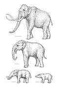 Quartet Posters - Elephant Evolution, Artwork Poster by Gary Hincks