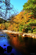 Williams Prints - Fall Color Williams River Print by Thomas R Fletcher