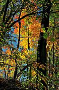 Fall Landscape Mixed Media Prints - Fall Fire Works Print by Robert Pearson