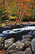 Rapids Prints - Fall forest and river landscape Print by Elena Elisseeva