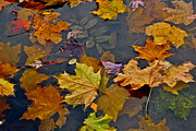 Fall Leaves Photos - Fall is Coming by Dorota Nowak