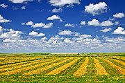 Field. Cloud Prints - Farm field at harvest in Saskatchewan Print by Elena Elisseeva