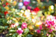 Colorful Roses Photos - Flower garden in sunshine by Elena Elisseeva