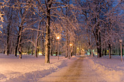 Night Lamp Posters - Frozen Path Through Trees Poster by Jaak Nilson