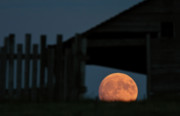 Board Fence Prints - Full moon seen through old building window Print by Mark Duffy