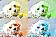 Toy Dog Posters - Funky Maize Poster by Fraida Gutovich