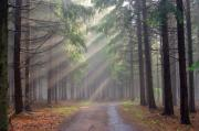 Sun Rays Art - God beams - coniferous forest in fog by Michal Boubin