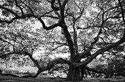 Granby Framed Prints - Granby Oak Framed Print by HD Connelly
