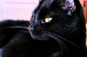 Witch Halloween Cat  Wicca Photo Prints - Green Eyes Print by Michelle Milano