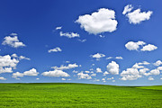Meadow Photos - Green rolling hills under blue sky by Elena Elisseeva
