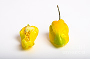 Hot Peppers Posters - Habanero Chili Pepper Poster by Photo Researchers, Inc.