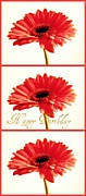 Gerber Daisys - Happy Birthday by Cathie Tyler