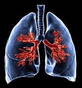 Biomedical Illustration Art - Healthy Lungs, Artwork by Andrzej Wojcicki