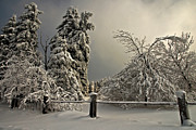 Snow On Trees Prints - Heavy Laden Print by Lois Bryan
