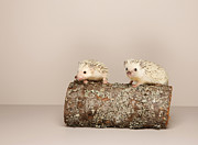 Colored Background Art - 2 Hedgehogs On Log, Studio Shot by Karen Moskowitz