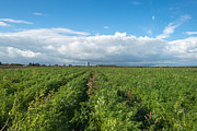 Flevoland Art - Highrise along a field with vegetables by Jan Marijs