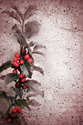 Cement Prints - Holly Branch  Print by Carlos Caetano