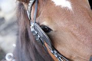 Mare Photo Originals - Horse by Carl Deal