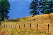 Ranch Prints - Horses on the Hill Print by David  Naman