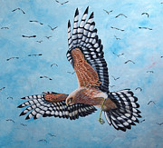 Harrier Paintings - Hunter by Paul Parsons