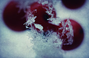 Ice Crystals Print by Sven Pfeiffer