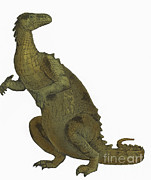 Two Tailed Photo Prints - Iguanodon, Mesozoic Dinosaur Print by Science Source