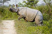Rhinoceros Photo Posters - Indian Rhinoceros Poster by Tony Camacho