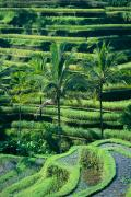 Layer Prints - Indonesia, Bali Print by Gloria & Richard Maschmeyer - Printscapes