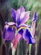 Back Porch Prints - Iris Painting Print by Irina Sztukowski