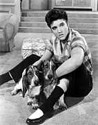 1950s Portraits Framed Prints - Jailhouse Rock, Elvis Presley, 1957 Framed Print by Everett