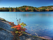 Killarney Provincial Park Framed Prints - Killarney Provincial Park in Fall Framed Print by Oleksiy Maksymenko