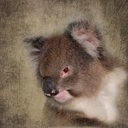 Koala Digital Art Prints - Koala Print by Louise Heusinkveld
