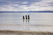 Wood Pile Prints - Lake Constance Print by Joana Kruse