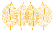 Organic Paintings - Leaves by Frank Tschakert
