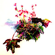Floral Drawings Originals - Linda Begonia by Mindy Newman