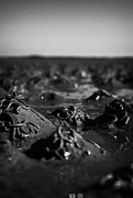 Flooding Prints - Lugworm Arenicola Marina Casts On Mudflats In Strangford Lough County Down Northern Ireland Print by Joe Fox