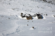 Snow-covered Landscape Prints - Madison Spring Hut- White Mountains New Hampshire Print by Erin Paul Donovan
