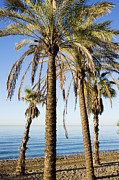 Holiday.summer Posters - Marbella Beach in Spain Poster by Artur Bogacki