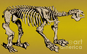 Theory Prints - Megatherium, Extinct Ground Sloth Print by Science Source