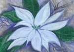 Healing Art Paintings - Midnight Poinsettia by Carey Waters