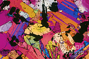 Micrography Prints - Moon Rock, Transmitted Light Micrograph Print by Michael W. Davidson - FSU