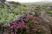 Dewdrops Prints - Mountain Heathland Print by Bob Gibbons