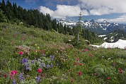 Cascade Mountains Prints - Mountain Meadow Print by Bob Gibbons